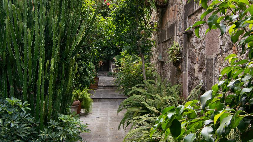 La Casa Dragones garden Casa Dragones Tequila