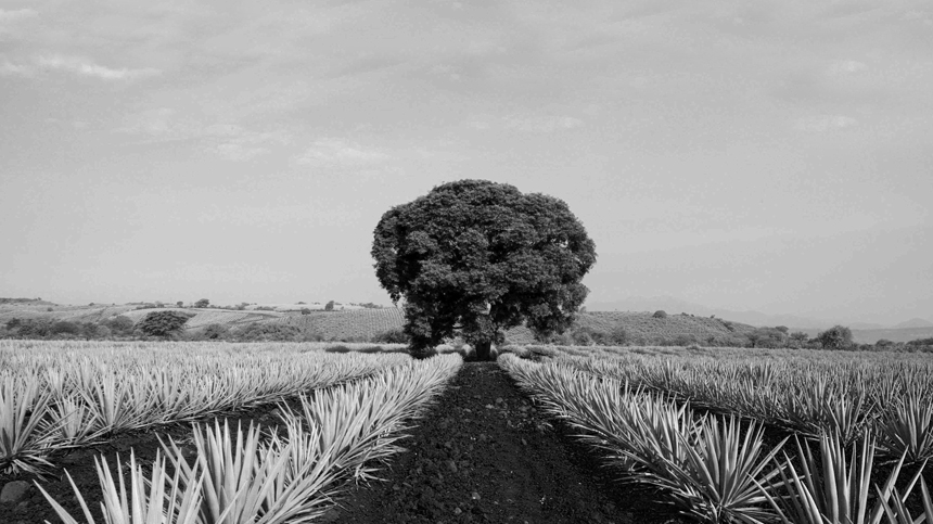valley of tequila