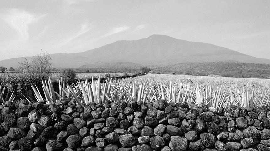 volcanic soil tequila region