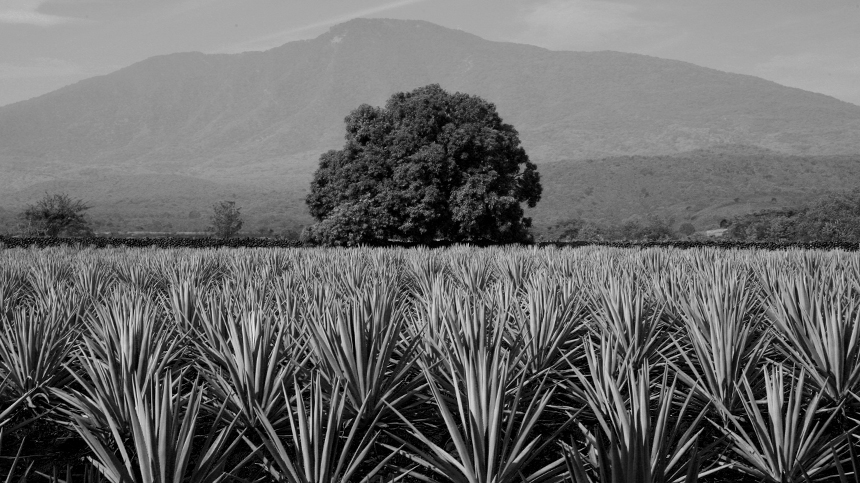 The Valley of Tequila