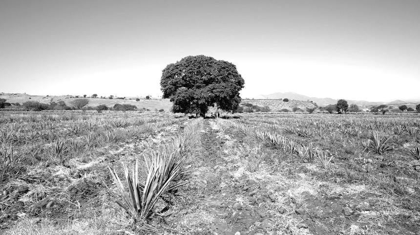 Tequila region