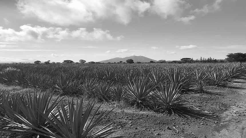 Miles of agave fields with Volcano of Tequila in the background.