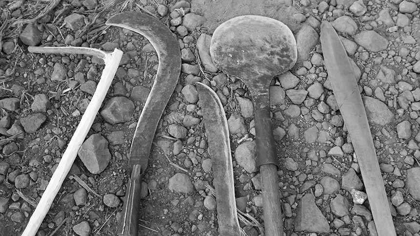 Tools that the Casa Dragones harvesters use to cultivate their Agave plants