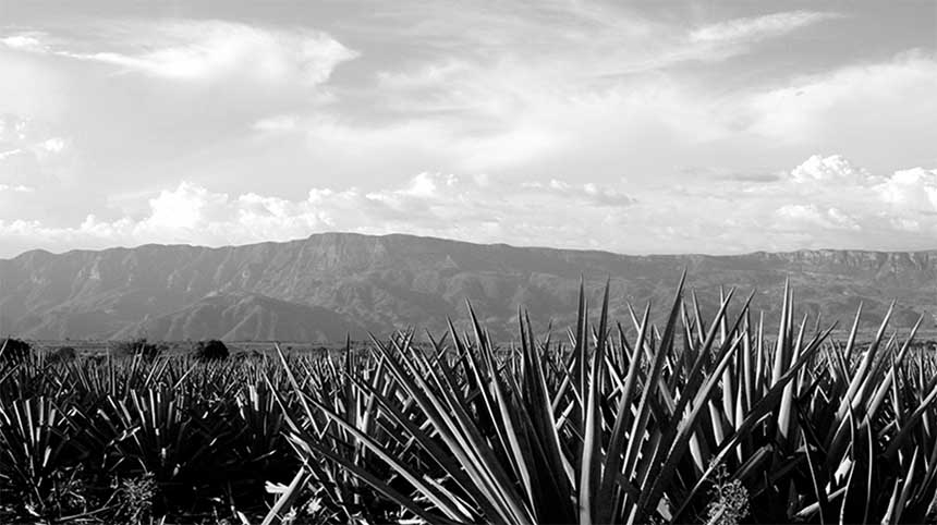 View of the volcanic-belt in Jalisco, Tequila. With agave plants at the picture's forefront.